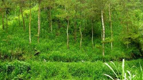 Hutan Coban Rondo begitu hijau ketika musim hujan. Tapi ketika musim kemarau, kondisinya kering kerontang dan tanahnya berdebu.
