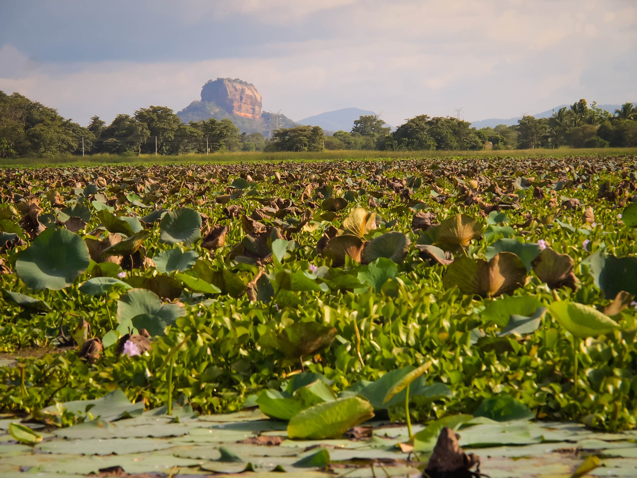 Sigiriya from across a lake