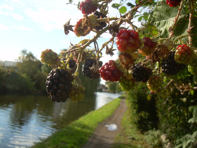 Blackberries - lovely free food