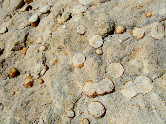 Spherical concretions that have been eroded by horse traffic across the sandstone