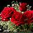Lisa Pasqualone avatar image
