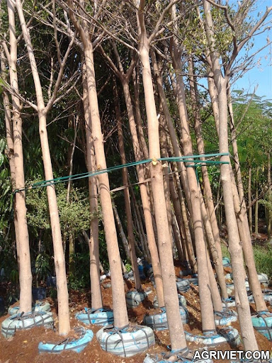 Agriviet.Com-resized_2012-12-03_10.17.01.jpg