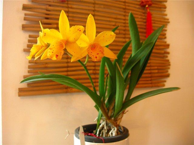 Растения из Тюмени. Краткий обзор - Страница 10 8587d7a81a42