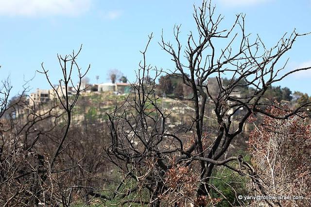 ישראל, תמונות, הר הכרמל