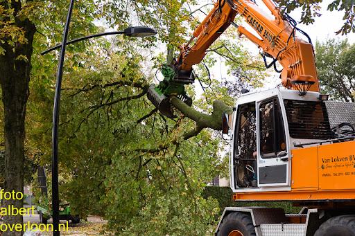 Bomen gekapt Museumlaan in overloon 20-10-2014 (20).jpg