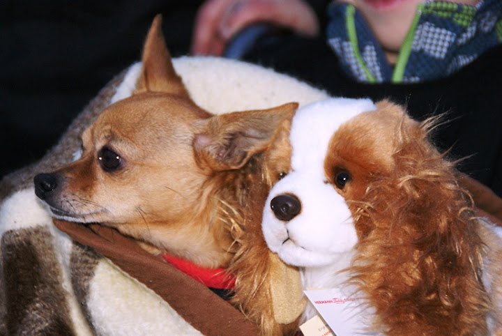 Benefizturnier 2012 - Hundefreunde Bregenz