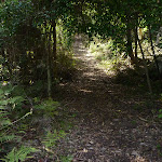 Some dense forest in Watagan State Forest (362489)