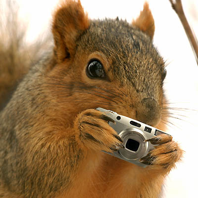 Funny Squirrel Wallpaper