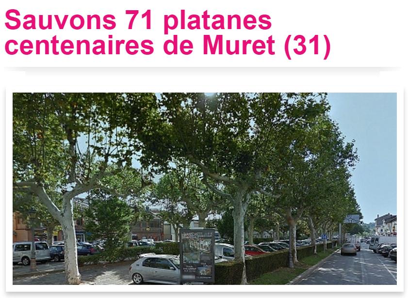 Soixante et onze platanes centenaires sont menacés pour construire un parking souterrain