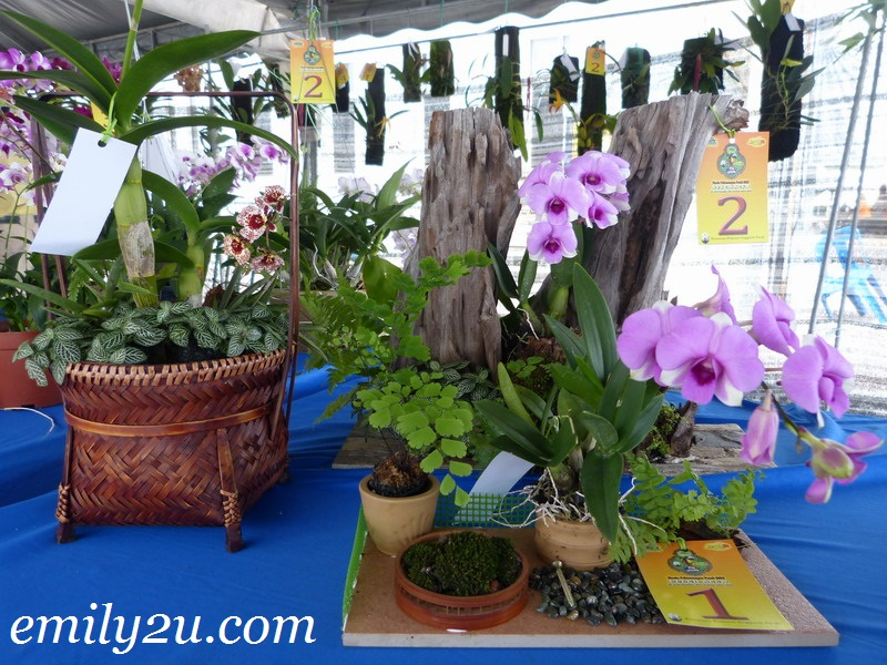 Orchid Show @ Fiesta Pelancongan Perak 2012