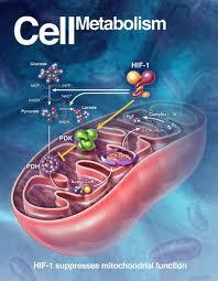 Pengertian Anabolisme dan Proses-proses Anabolisme