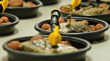 Cultivo solo ou hidropônico