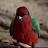 Kieran Bell avatar image
