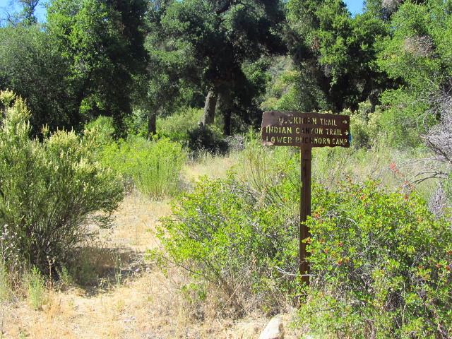 trail into Lower Buckhorn Camp