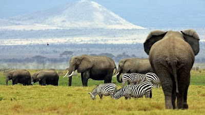 Water for elephants needed in parched Zimbabwe
