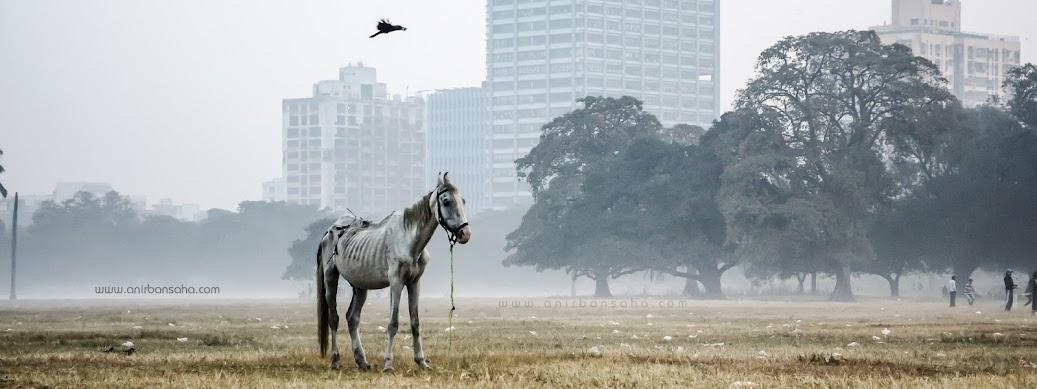 mist, kolkata, street photography, kolkata lake gardens