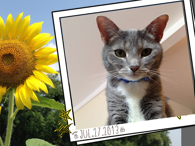 sunflower kitty