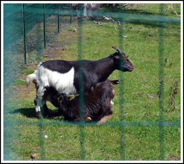 dans le petit  parc animalier  dans les animaux amis