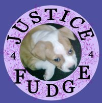Fudge the Puppy Who Was Never Given a Chance