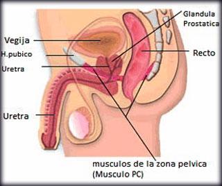 Mejora del impulso sexual masculino