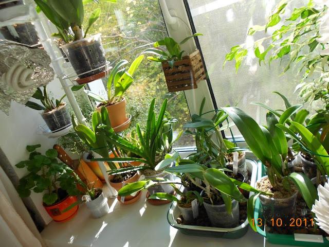 Размещение орхидей - Страница 5 DSCN1067