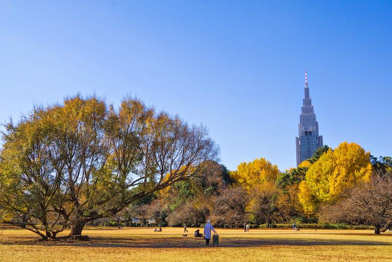 新宿御苑 紅葉 写真9