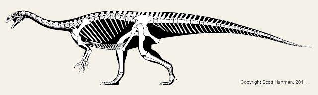 A History of Skeletal Drawings: Part 1 (pre-20th century