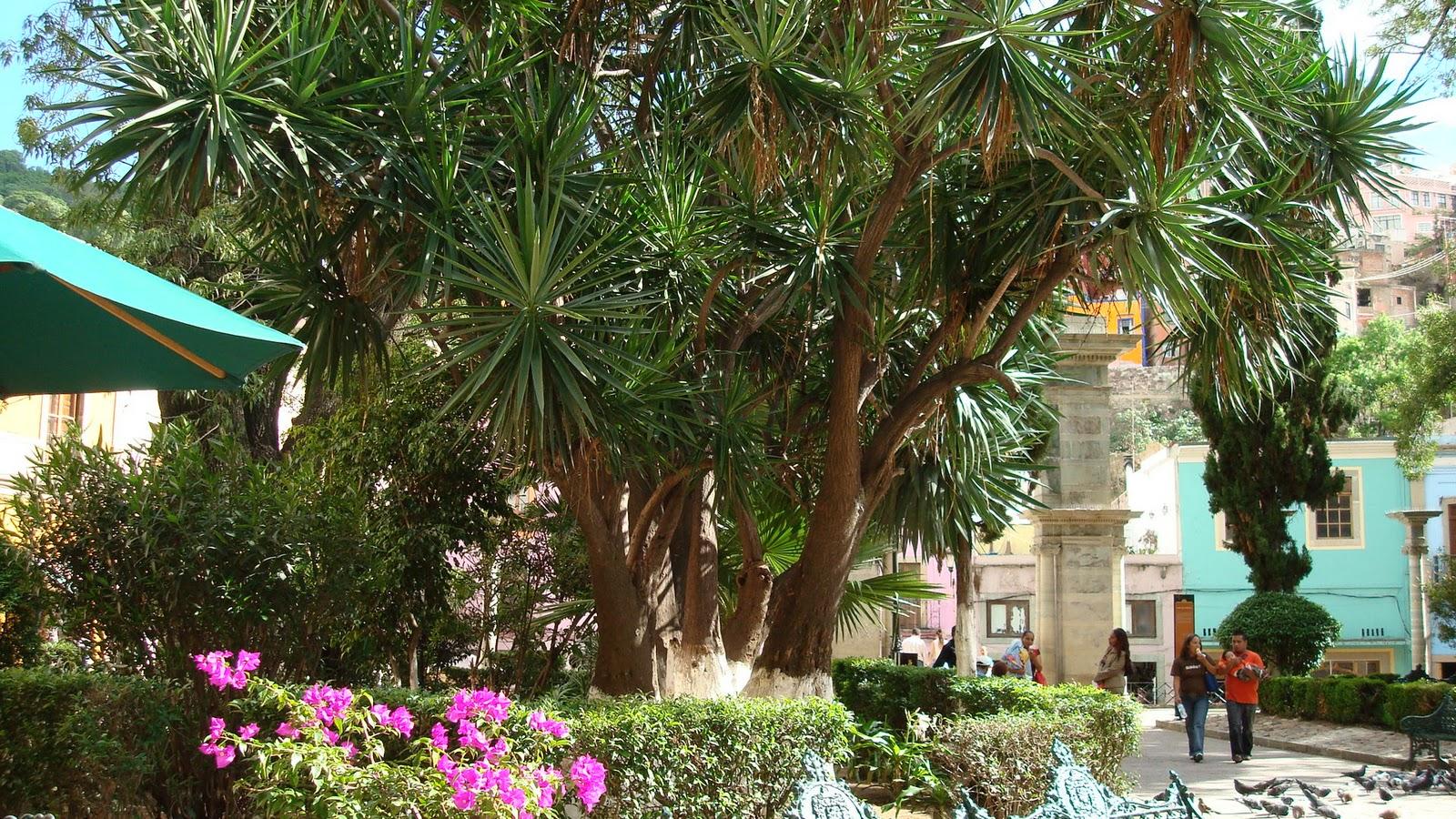 Sancarlosfortin arboles y plantas guanajuato for Arboles y plantas de jardin