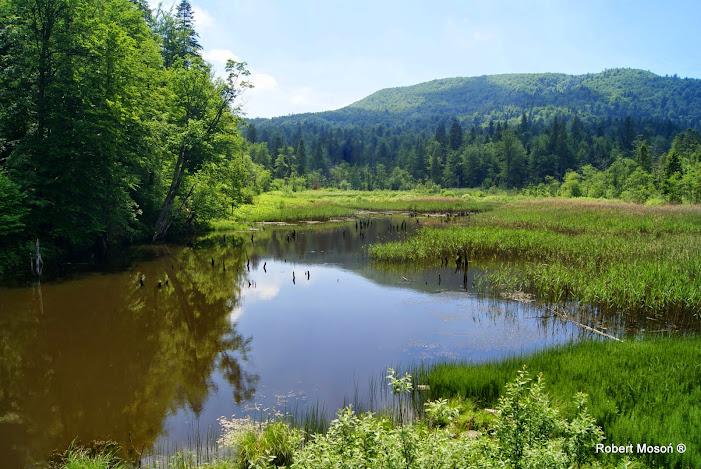 Bieszczady, Huczwice, Jeziorko Bobrowe pod Chryszczatą,