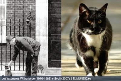 imagen de gatos ratoneros en Torre de Londres