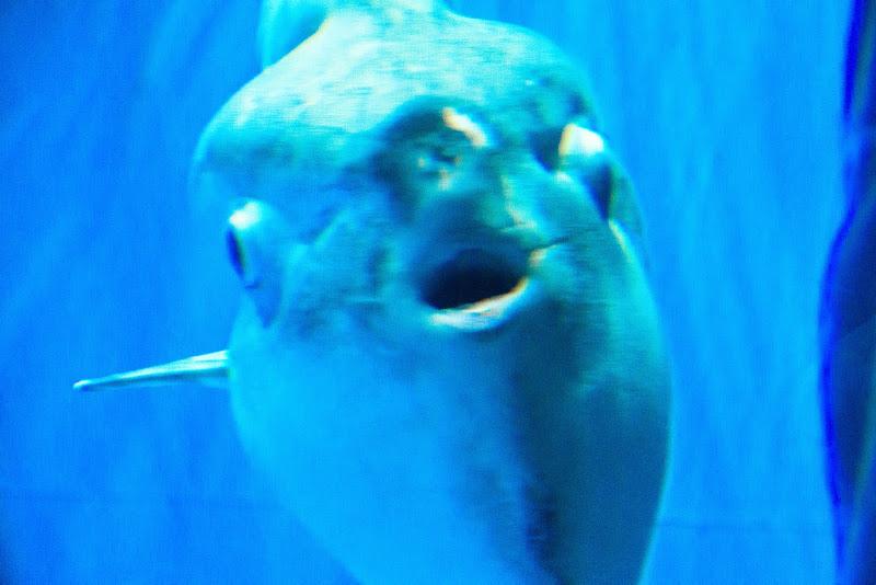 アクアワールド大洗水族館 写真8