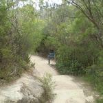 The trail near Princes Rock (7784)