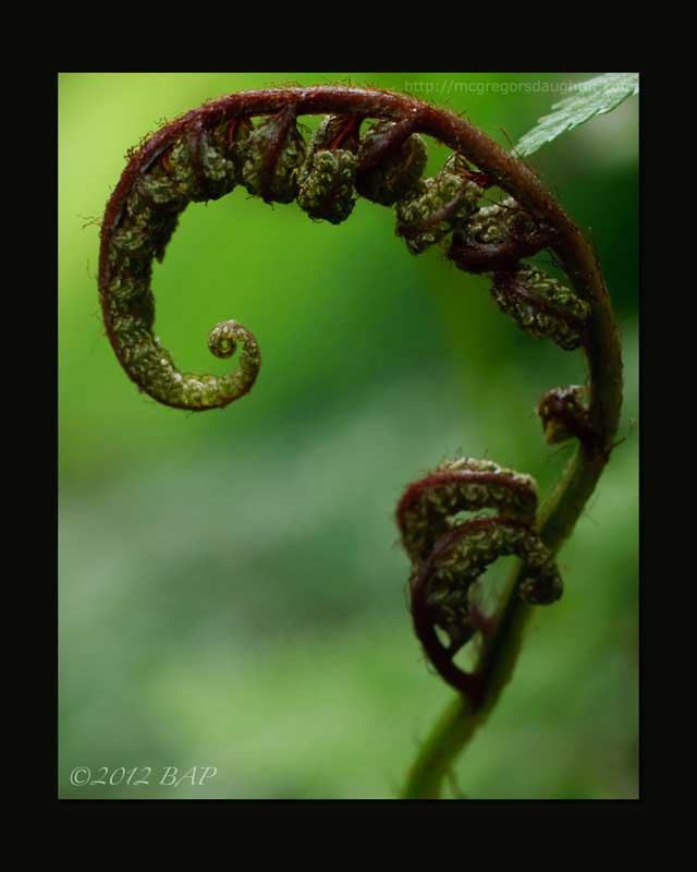 Photo of the Week: Painted Fern