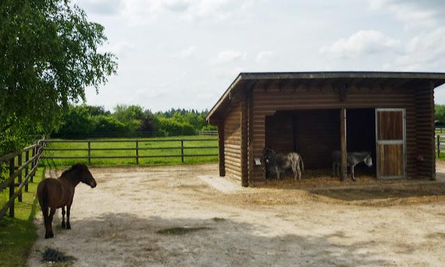 Esel und Pferde im Stall.