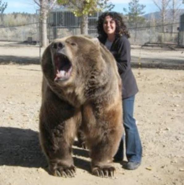 Urso pardo vs Urso polar - Página 2 3652