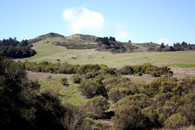 Windy Hill in Portola Valley
