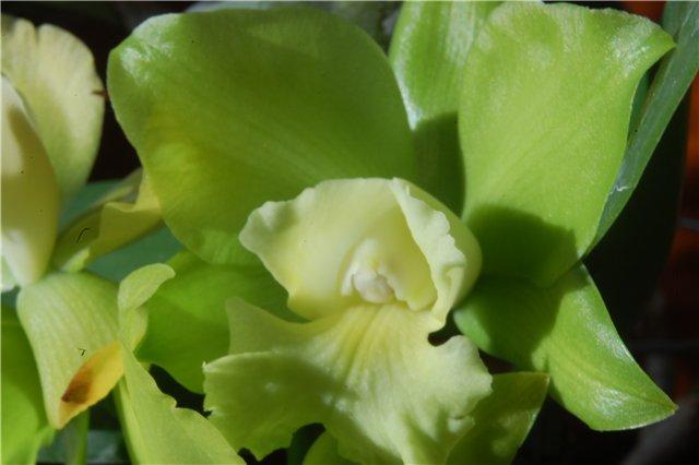 Растения из Тюмени. Краткий обзор - Страница 9 A02a7c26749a