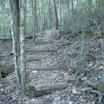 Timber steps east of Wollombi Brook (366125)