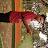 Setia lukito avatar image