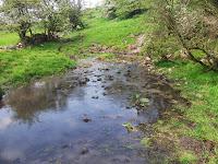 Site D14, spring