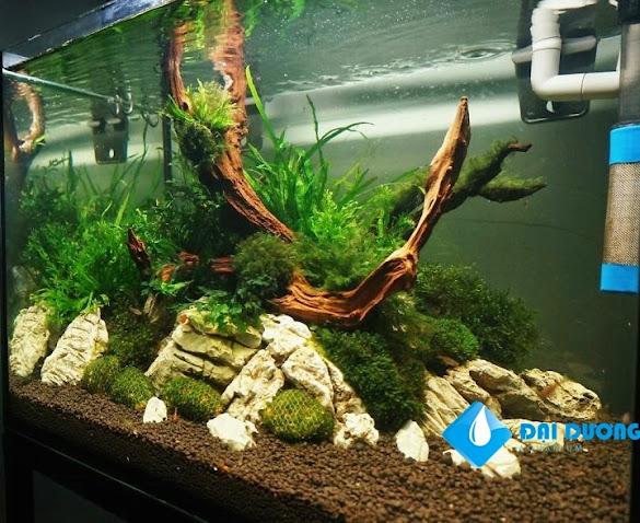 hồ rêu và dương xỉ