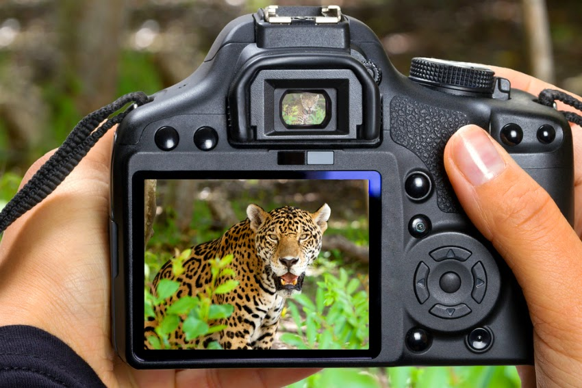 Safari Photography - tips and tricks
