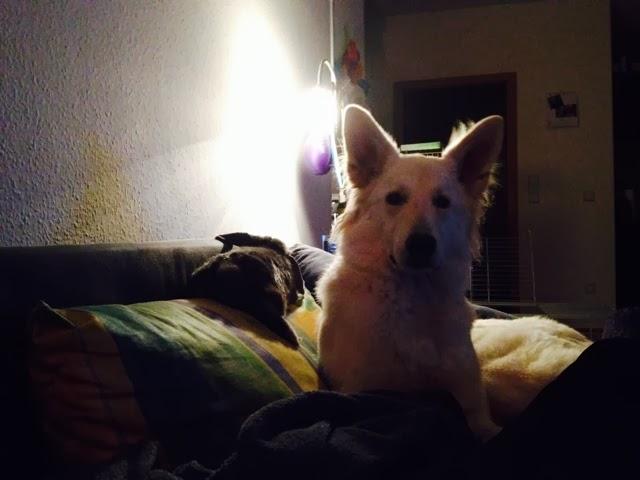 blogger-image--862562466 %Hundeblog