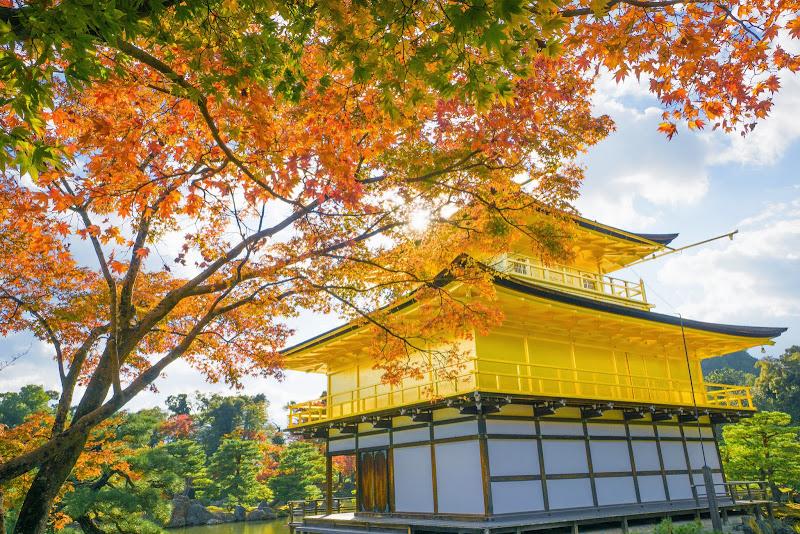 京都 紅葉 金閣寺 写真6