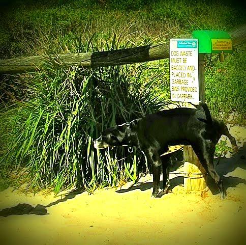 Dog Beach, Sydney, Australia