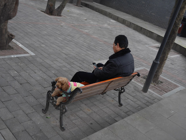dog on bench with head resting on the armrest