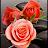 amir AHW avatar image