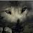 Grey Wholf avatar image