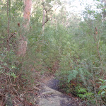 Track above Campfire Creek (145215)