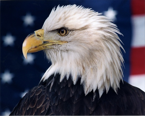 """""""Patriot"""" by Photographer Ron Edwards."""